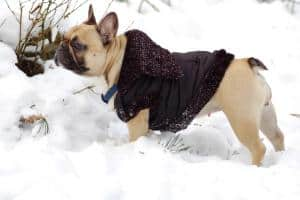 Best Dog Jackets for Winter 2019